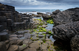 Bevy British Isles view of rocks and moss by ocean