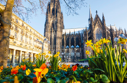 Tulips with a cathedral in the background