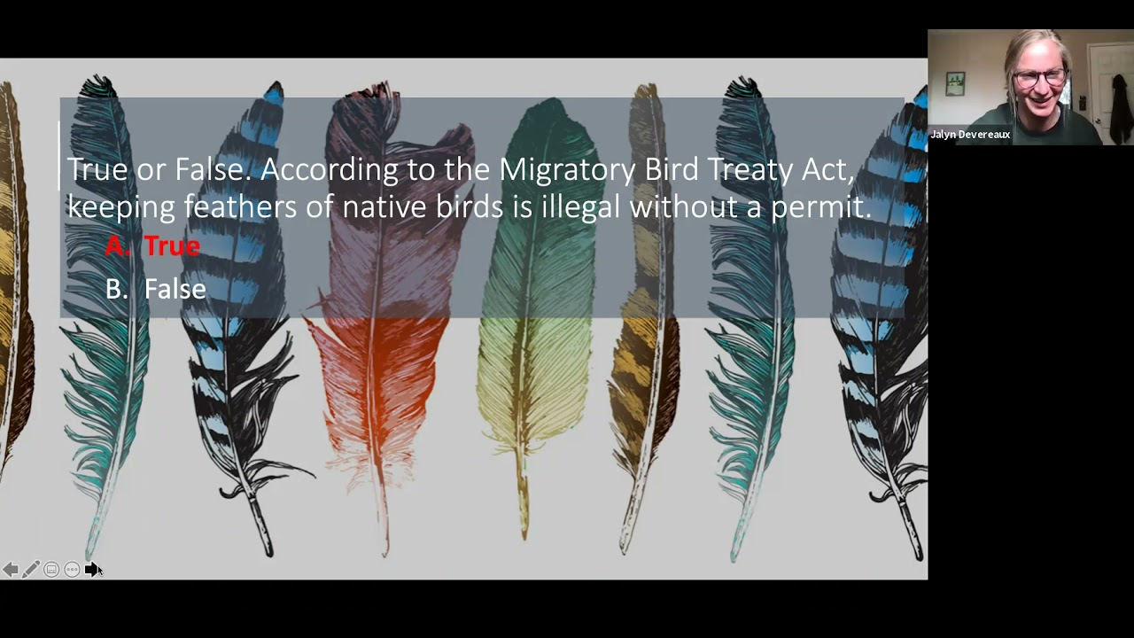 """""""True or False: According to the Migratory Bird Treaty Act, keeping feathers of native birds is illegal without a permit. A True, B False"""" text, screenshot from zoom meeting"""