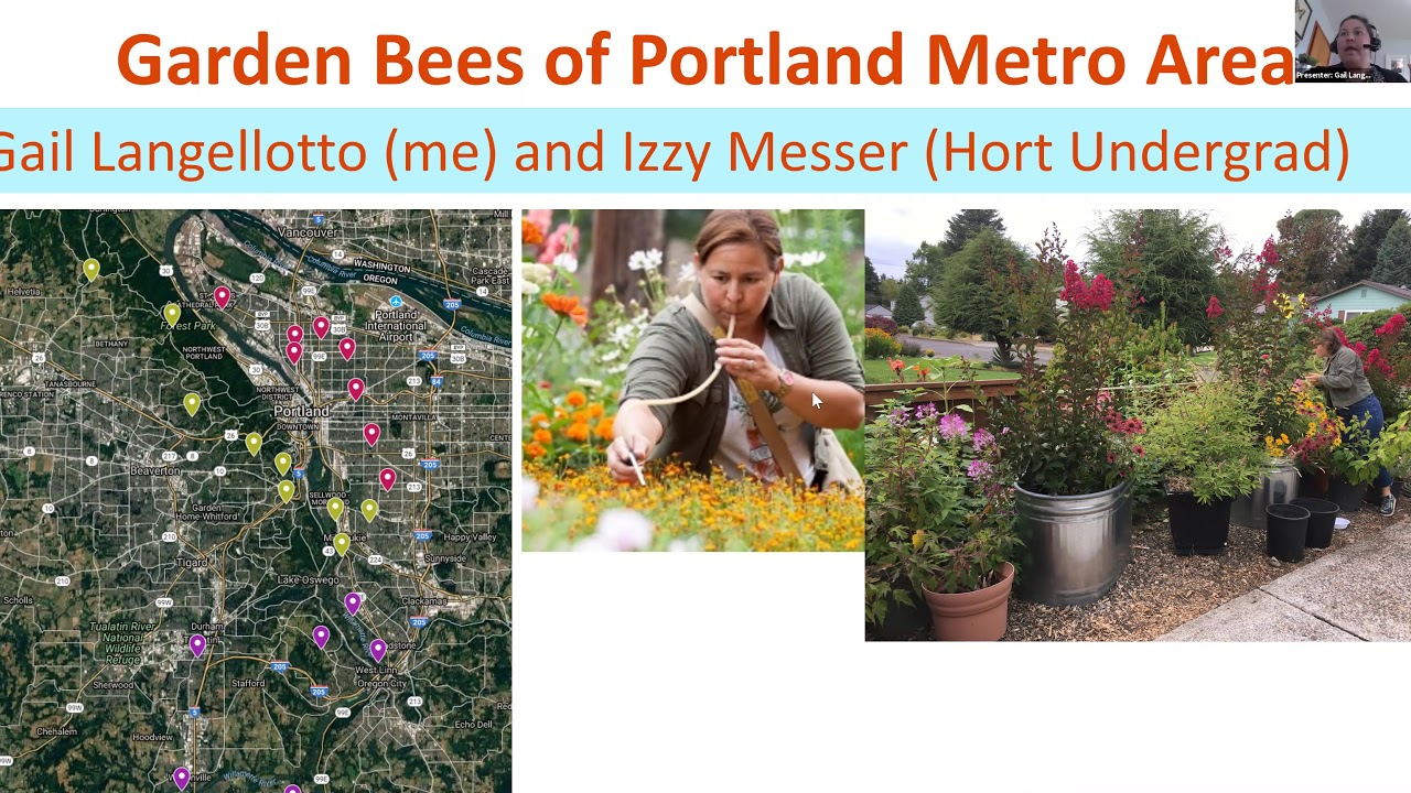 """""""Garden Bees of Portland Metro Area, Gail Langellotto and Izzy Messer (Hort Undergrad)"""" text with image of map, woman gardening and flowers"""